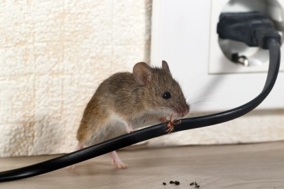 Pest Control in Ilford, Loxford, IG1. Call Now! 020 8166 9746