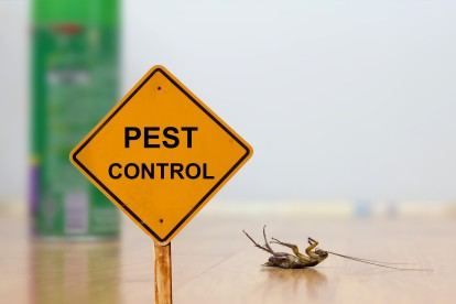 Pest Contol in Ilford, Loxford, IG1. Call Now 020 8166 9746